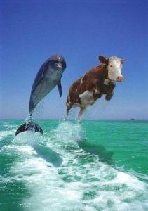 flyingcowlarge